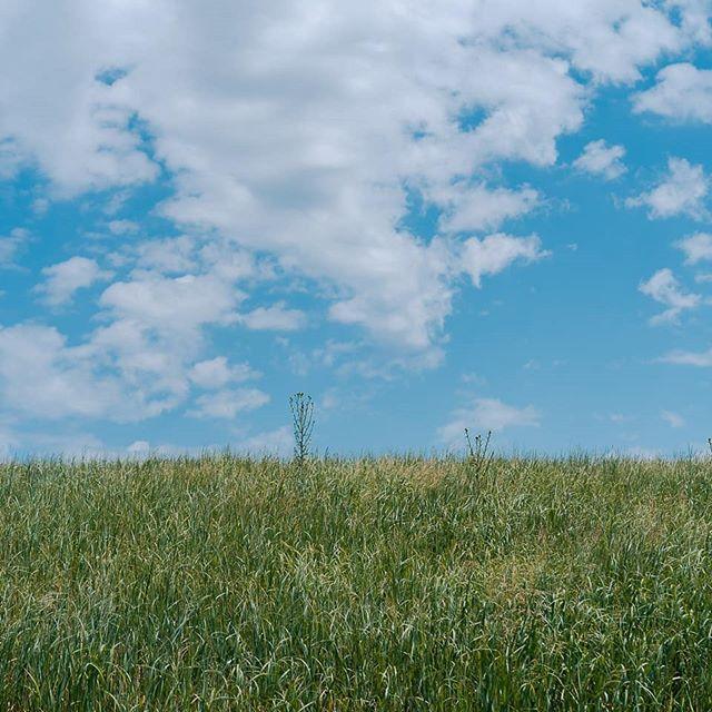 It's a really nice day, you should go enjoy it. - - - - - #getlost#sonyalpha #optoutside#worldshotz #theworldshotz #createexplore #exploretocreate #theimaged #artofvisuals #keepexploring#roamtheplanet#letsgosomewhere#nakedplanet #landscape #thecreatorclass #thevisualscollective #justgoshoot #visualsoflife #igtravel #keepexploring #moodygrams #agameoftones #ig_masterpiece #aov #instapassport#visualgang #igersboston #boston