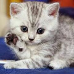 kedi tatlısı