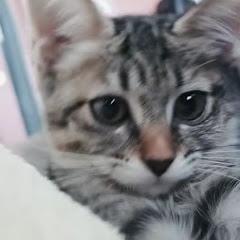 바바 치카 길냥이와 개냥이chica cat