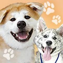 秋田犬だいすけ&さくら