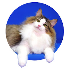 피니엔스of Cats