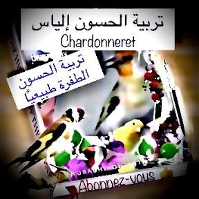 Chardonneret تربية الحسون إلياس