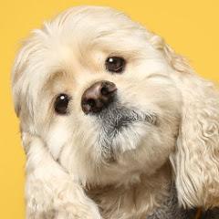 강아지랑 뭐할까_멍블비