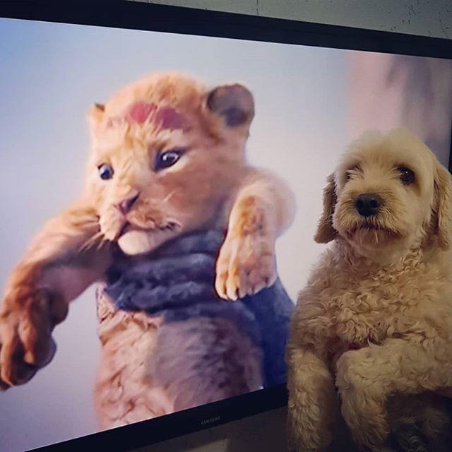 Princesa Leão !!! #dog #doglovers #melhoramigodohomem #catioro #viralata #pet #petlovers @catiororeflexivo_