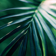 Jungle Technique