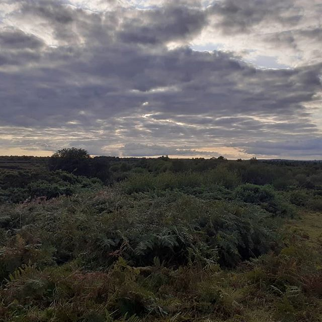 The evening rises  #photograph #countryside #sky #evening #forest #bogland #perspective #naturephotography #photography #country #clouds #stunning #thesky #sun #dark #light #trees