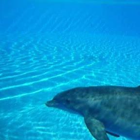 understanddolphins