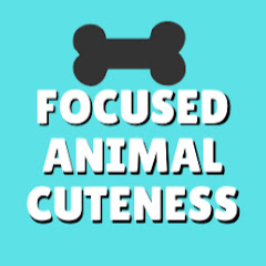Focused Animal Cuteness