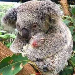 Amanti Animali