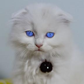 Meow Meow Pi