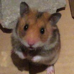TG Hamster