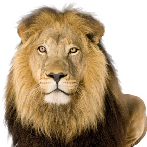 PERSIAN LIONS