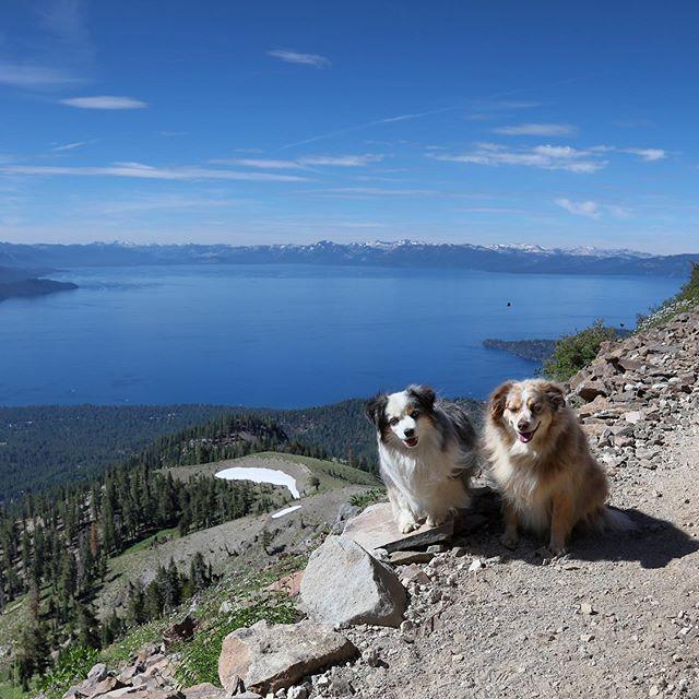 Happy trail Australian Shepherds. Those two black dots above Kensington's head are butterflies—there were crazy numbers of them in Tahoe this summer.  #tahoeaussies #laketahoe #tahoenorth #renotahoe #tahoe #weeklyfluff #optoutside #hike #hiking #hikingdogsofinstagram #hikingadventures #lake #lakelife #mountains #mountainlife #dogsthathike
