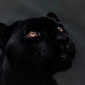 Леди Пантера