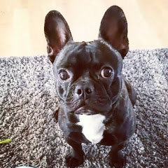 Flor The Frenchie