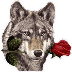 Alfir Love