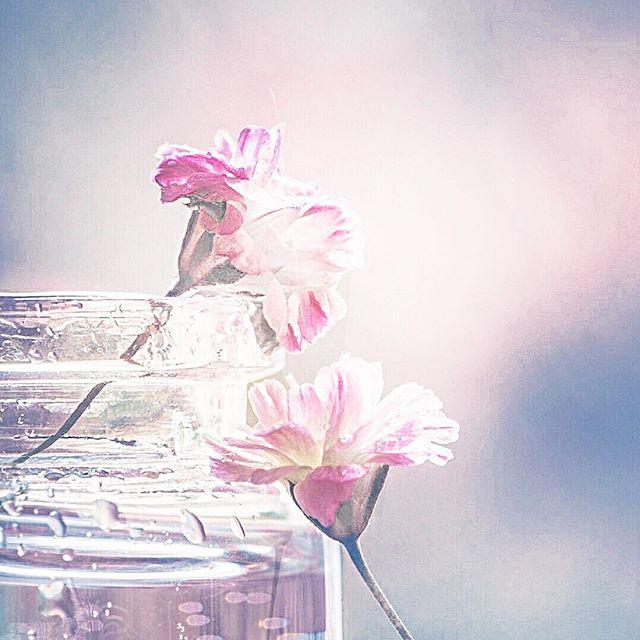 """All you need to know is that it's possible."" . . . . . #twosoulsonedream #possible #keepgoing #beliveinyourself #campervanlife #borntobewild #naturelovers #homeonwheels  #aroundtheworld #ourdream #wanderlust #worldtraveler #vanlifemovement #exploretheworld #flowers #sheisnotlost #wanderer"