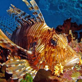 Aligris Underwater