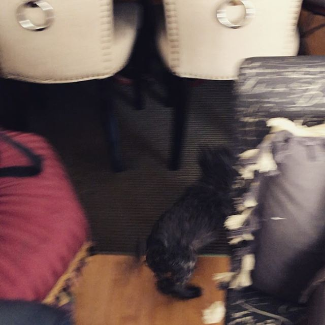 Just gave her a bath.  #dog #doggo #dogsofinstagram #pupper #puppy #puppiesofinstagram #dogstagram