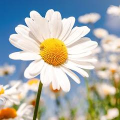 Flower 🌸 Asmr