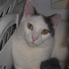 gatito Hermoso