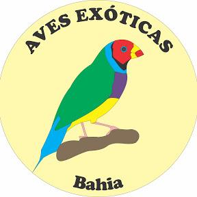 Aves Exóticas da Bahia