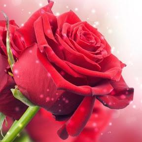 Mejores Frases de Amor, Reflexiones de Vida y Amor