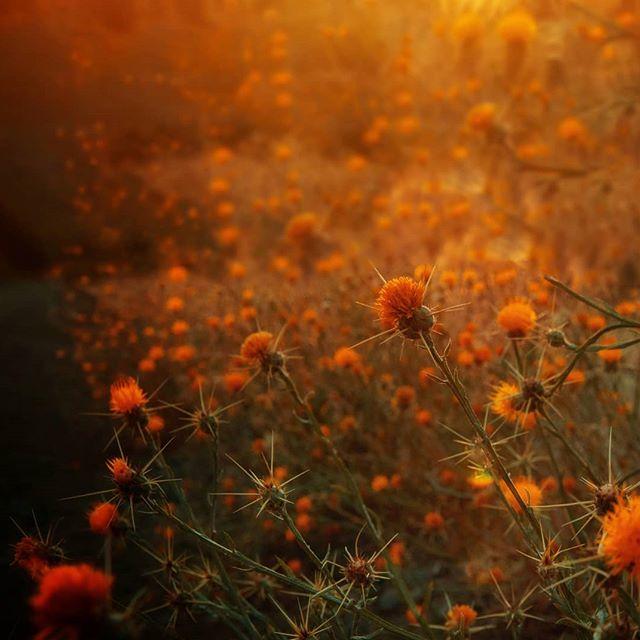 Cuando la primavera se va anunciando en la aridez patagónica... 🧡 _ _ _ _ _ _ _ _ _ _ _ _ #paisaje #flowers #colores #naturelover #naturaleza #nature_good #inspira #instaflowers #orange #flores #travelpics #travelarg #patagoniaargentina #patagonia #patagoniaphotography #descubriendoneuquén #travelphoto #instamoment #lovepic #flores #beautifulpic #travelpatagonia #landscapes #nature_shooters