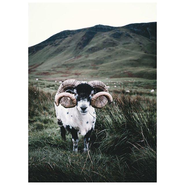ornament [1/2] / Scotland. / with Fujifilm X-T2 + XF18-55 F2.8-4. . . #nuagesmagazine #exploreobserveshare #scotland #visitscotland #wonderlustscotland #weroamgermany #repostmyfuji #myfujifilm #lookslikefilm #fujifilmde #folkgreen #landscape #fujixfam #fujifilmnordic #collectivelycreate @stademagazine #solarcollective #take_magazine #hiddenscotland #takemagazine #eyeemoninstagram #fujilove #myfujilove #fujifilmfeaturetime #imaginarymagnitude #stademagazine #oldtonefilm #fadedaesthetics #landscapephotography #fujifilm_global #earthofficial