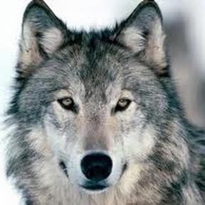 Wolfine Clarisa