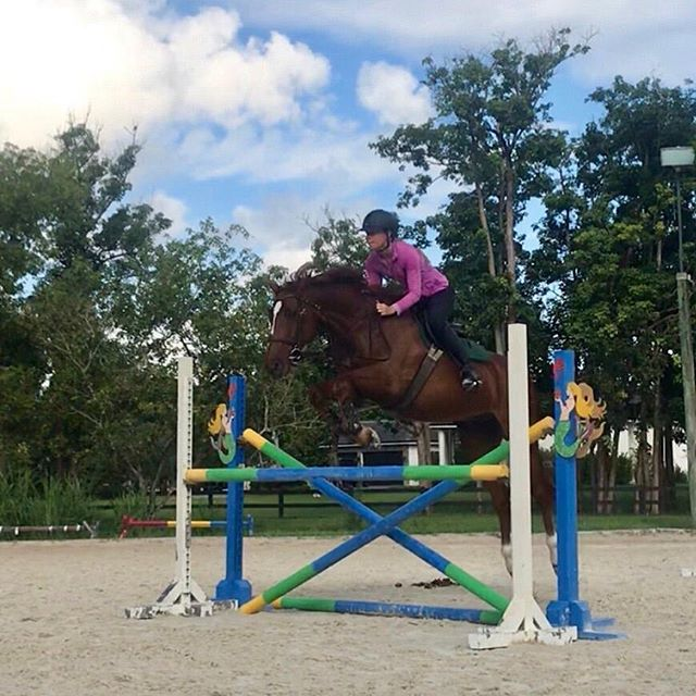 Happy to be jumping again. I look like I'm trying to be the next Roger-Yves Bost though.  #pony #jumper #bosty #pitchoun #eqnotsogreat #horsesofinstagram #SF