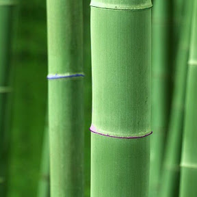 Bamboo Gamer