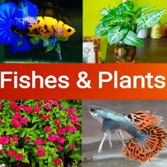 Fishes & Plants