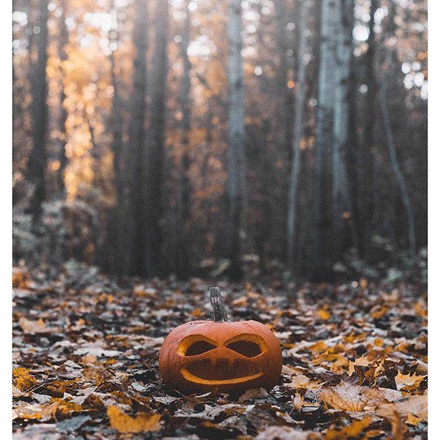 Happy pumpkin day 🎃