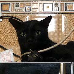 Nhà Đạt toàn chó với mèo