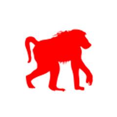 Monkey Videos