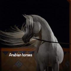 Arabian horses خيل عربي اصيل