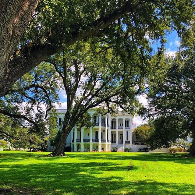 Nottaway Plantation c1859 is the largest antebellum Plantation in the South at 53,000 sq ft - repost 📸@cb_photos_1518 - John Randolph spared no expense in creating this home- Baccarat & brass chandeliers, Handpainted German Dresden porcelain door knobs and matching keyhole covers, The white ball room ( see yesterday's pic!) has Corinthian columns & hand cast archways- the room in which six of the seven Randolph daughters were married. Brides are still married in this Grand ballroom-#Nottaway #NottowayPlantation #mustseeplantation #Plantation #LouisianaPlantation #RiverRoadPlantation #HistoricLouisianaHomes #Louisiana #GreekRevival #italianatearchitecture #LargestPlantationInTheSouth  #nottawaywedding