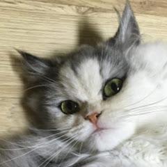 하모니티비 Hamony TV - Munchkin Cat Family