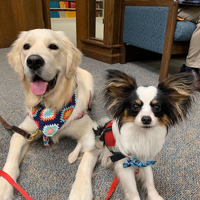 Ready for some puppy snuggles? And free food? And a chance to win gift cards?! Come to the library open house tomorrow from 1-8pm! The event is located in the writing center on the second floor of the Heterick Library. Can't wait to see you there!