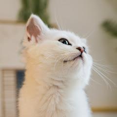 花花与三猫 Cat Live