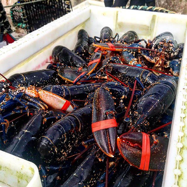 shopping in the harbor of john o'groats...#visitscotland#redlobster#lobsters#lobster#scotland_lover#scotlandfood#scotland_insta#scotland_ig#truescotland#scotlandhighlands#johnogroats#scotlandharbor#scotlandexplore#neverstopexploring#camperlove#campertrip#scotland2019#foodlove#foodporn#picfoods#lobsterlover#shoppingoftheday#scotlandtravel#scotlandshots#scotlandroadtrip#travelgram#travelphotography#scotlandphotography#visitgreatbritain#instagreatbritain#