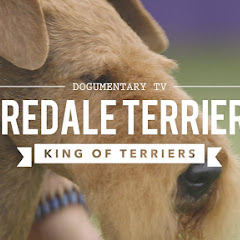 Airedale Terrier - Topic