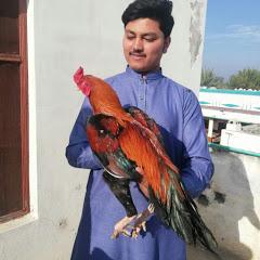 Tayyab Rasool