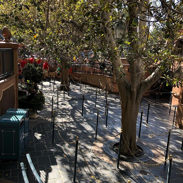 No line for Pirates. Everyone must be at D23.🤔 The park is not empty though!🤷♀️