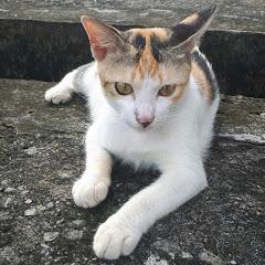 SAM LIVE Cute Cat