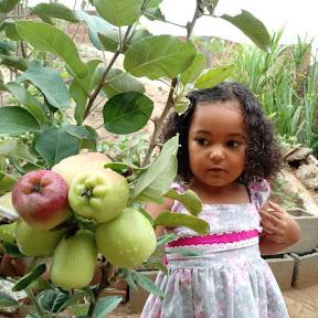 Frutas em vasos da Júlia