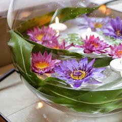 水生植物専門店 杜若園芸