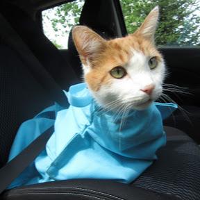 Cat-in-the-bag Cozy Comfort Carrier