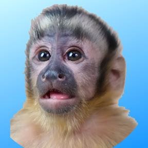 MonkeyHappy